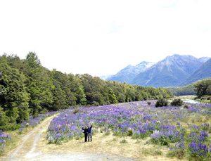 Tour organizado en moto Nueva Zelanda: Dunedin a Tekapo